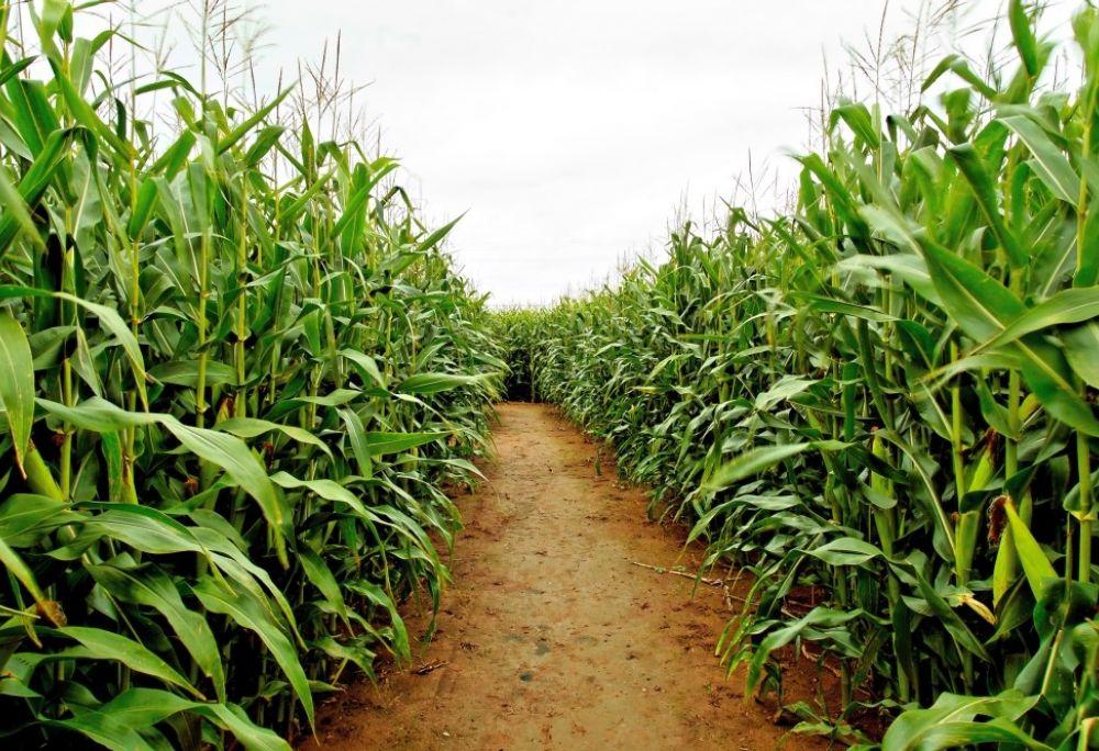 Visita il Labirinto di Mais
